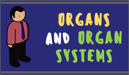 KS3 - Organs and Organ System-image