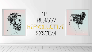 KS3 - The Human Reproductive System