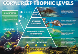 Coral Reef Trophic Levels-image