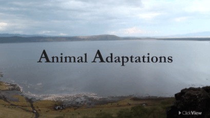 Animal Adaptations thumbnail image