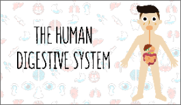 KS3 - The Human Digestive System-image