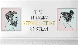 KS3 - The Human Reproductive System-image